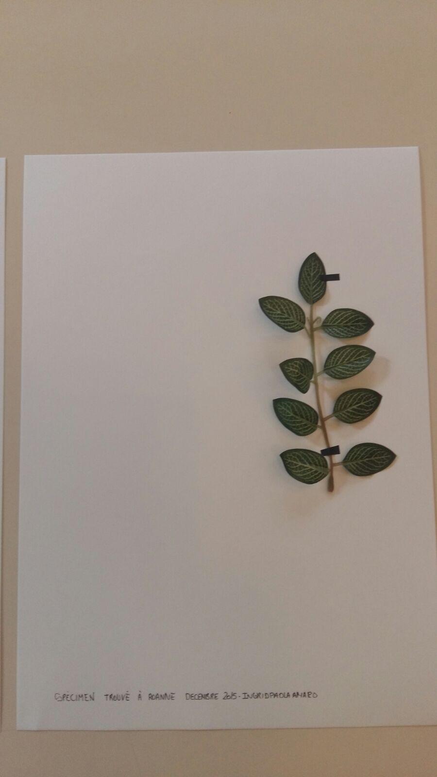herbier-artificiel5-ingrid-paola-amaro-2016